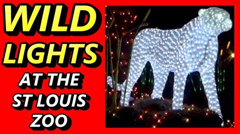 stl zoo lights lights at the st louis zoo family friendly