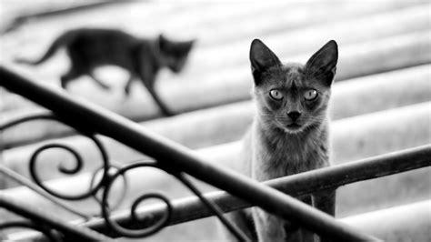 imagenes artisticas de gatos fondos de escritorio de gatos fondos de pantalla de gatos