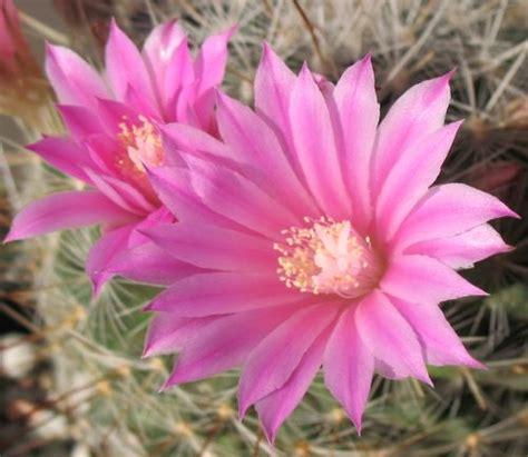 fiori con nomi fiori rosa nomi gpsreviewspot