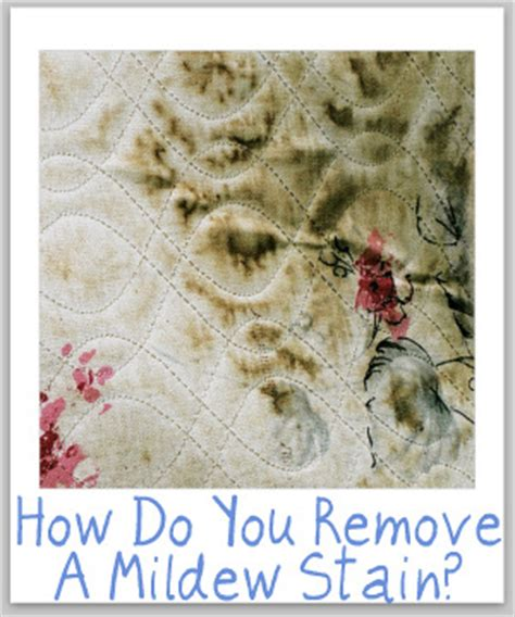 how to remove mold from upholstery stain removal mildew tips for all types of surfaces