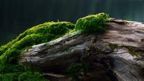 mossy green mossy log wallpaper 756384