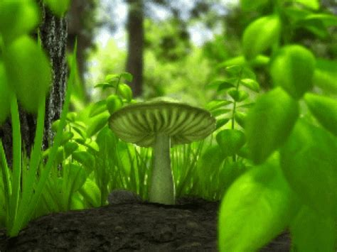 wallpaper gif psychedelic trippy mushroom full screen best funny gifs and