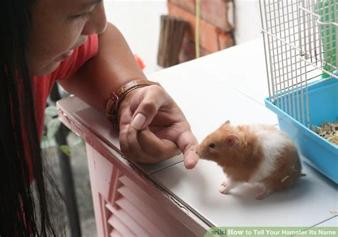 how to your its name how to tell your hamster its name 5 steps with pictures