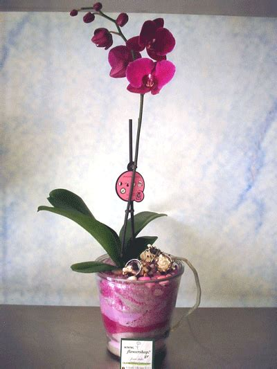 Decorative Sand For Vases by Phalaenopsis Orchid In Glass Vase With Decorative Sand Layers