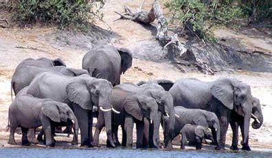 botanical name of elephant elephant cites