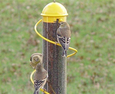 spiral finch tube bird feeder