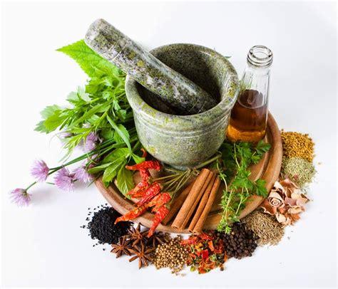Tanaman Herbal 8 tanaman obat anti hipertensi tanaman berkhasiat dan