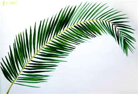 Palm Tree Leaves Drawing how to draw a coconut palm tree