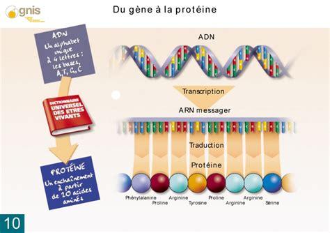 m protein definition td n 176 1 la mol 233 cule d adn