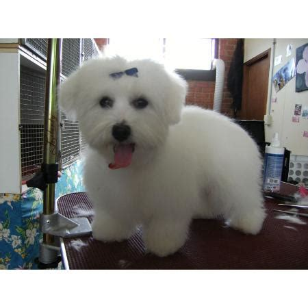 pawfect puppy pawfect grooming cat clipping grooming jetty