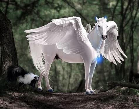 cavalli volanti 14 best images about cavalli alati ed unicorni on