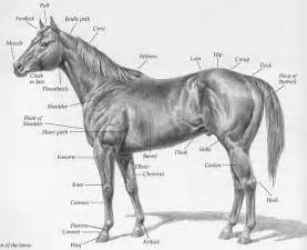 amerikanische pferdekunde