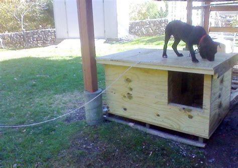 pitbull dog house plans pitbull dog house plans inspirational build a better dog