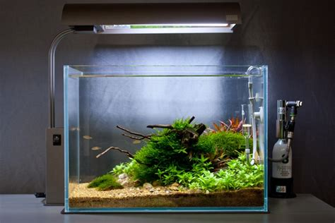 green machine aquascape 1000 images about fish tank on pinterest aquascaping
