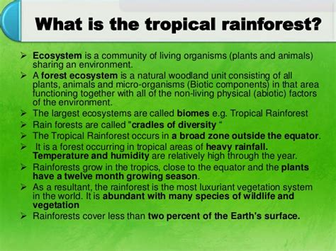 Plants In The Tropical Rain Forest - tropical forest ecosystem