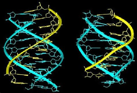 triple helix dna dna interactive the dna structure dna triple helix