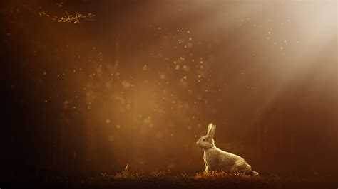 rabbit   wallpapers hd wallpapers id