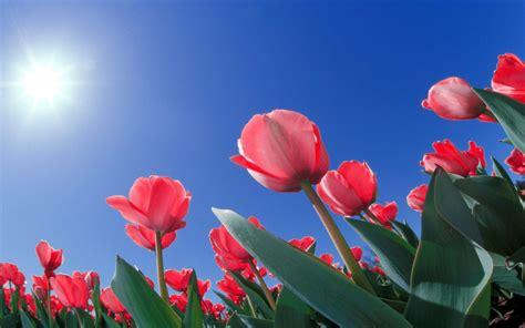 flowers sky nature light plant bloom hd wallpapers hd flowers wallpapers wallpaper cave