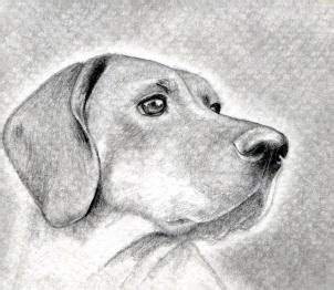 imagenes realistas de animales how to draw a dog head dog head step by step realistic