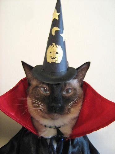 wizard cat wizard cat on