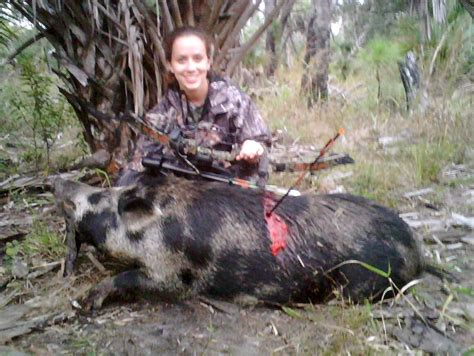 how to a to hunt hogs the hunt for hog