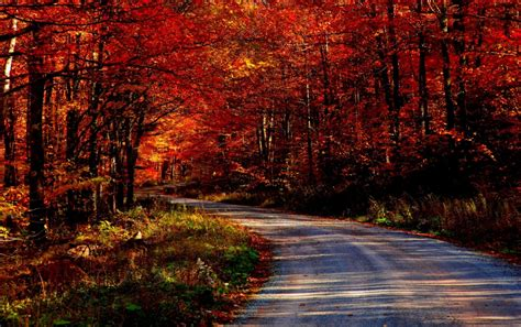 screensaver camino awesome autumn road wallpapers awesome autumn road