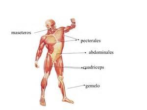 Hacer Planos Online el cuerpo humano