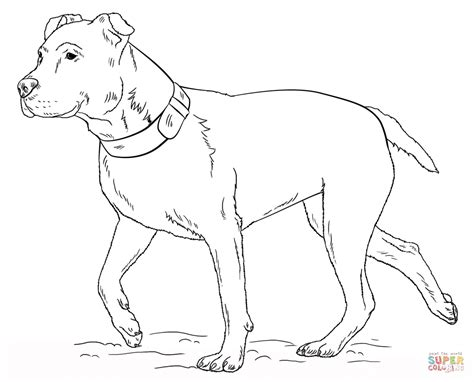 coloring pages pitbull puppies free coloring pages of pitbull