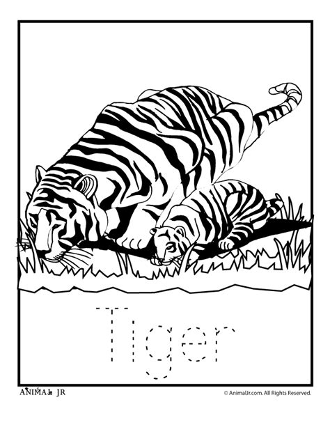coloring pages of zoo animals coloring home