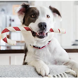 petsmart puppy playtime gifts your wants petsmart 174