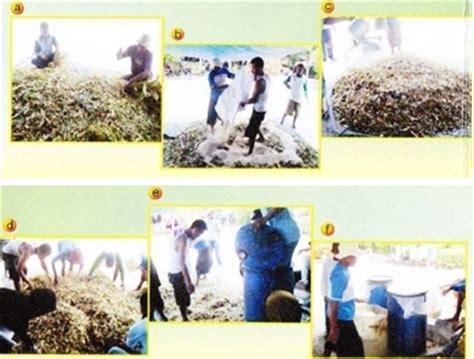 Ragi Untuk Suplemen Pakan Ternak teknologi pembuatan pakan komplit untuk ternak