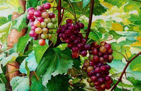 Imagenes De Uvas En Oleo | im 225 genes arte pinturas pinturas bodegones con uvas