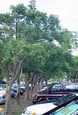 best seattle tree lot 17 best images about car parking lots on insurance tree line and technology