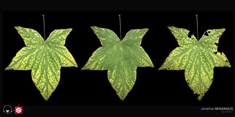 zbrush leaf tutorial jonathan benainous procedural leaf generator substance