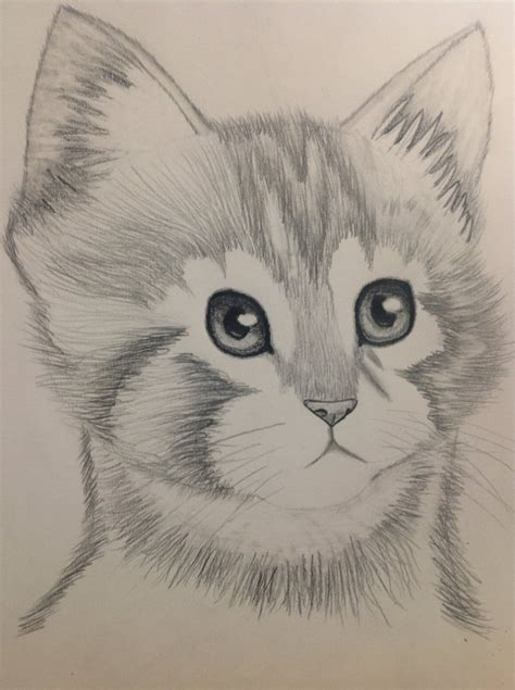 drawings of pencil drawings of kittens easy to draw pencil sketches