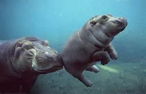 Newborn Photography Los Angeles Baby Hippo Flickr Photo Sharing