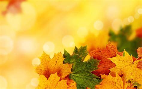 imagenes uñas otoño 2015 у столицю прийшла метеорологічна осінь 112 ua