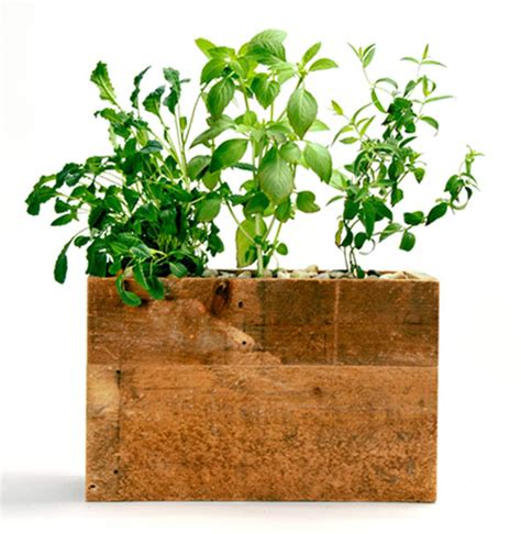 Modern Sprout Planter by Modern Sprout A Decorative Hydroponic Planter For Your
