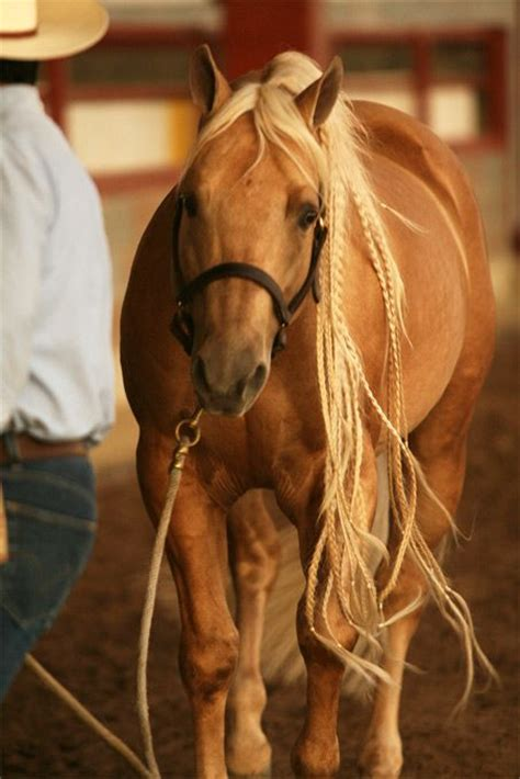 hairstyles for horses impressive horse mane braids rustic western furniture store