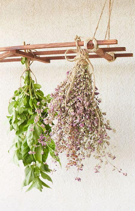hanging herbs hanging herb drying rack
