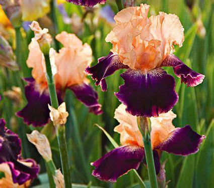 25 best ideas about iris fashion on pinterest iris apfel iris apfel documentary and iris