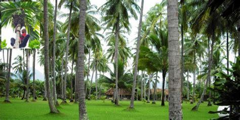 kisah tuna netra pemanjat pohon kelapa dream co id