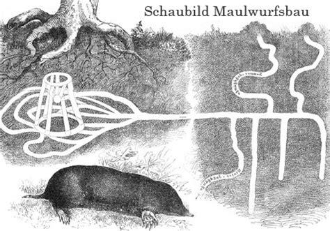 Maulwurf Gangsystem by Maulwurf Und W 252 Hlmausbek 228 Mpfung