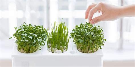 indoor herb garden ideas   indoor gardens