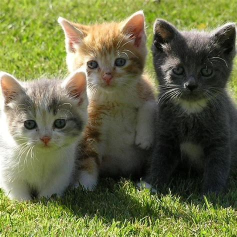 three cute kittens icycute