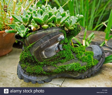 Moss In Planters by Plant Container Leather Boot Covered With