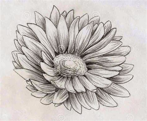 Drawing Flowers by Top 13 Flowers Sketches Beautiful Sketching Flowers