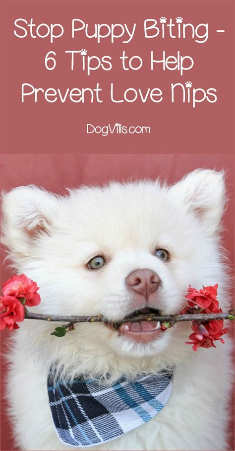 stop a puppy from biting stop puppy biting 6 tips to help prevent the nips dogvills