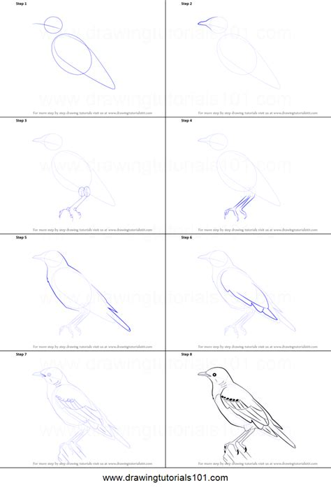 how to draw a how to draw a starling printable step by step drawing