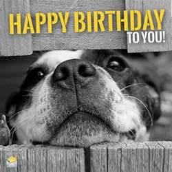Birthday Animal Meme - funny animal meme happy birthday
